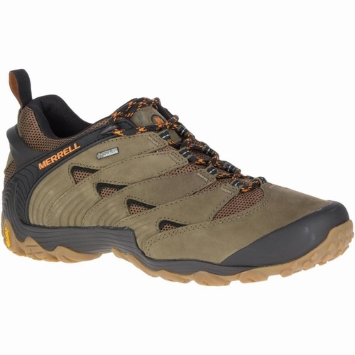 Cham 7 GTX, Dusty Olive